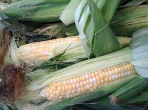 Sweet Taber Corn